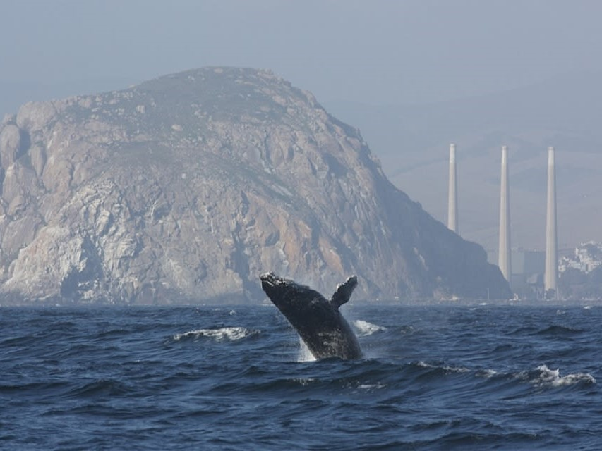 WHALE WATCHING TOURS IN MORRO BAY